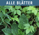 Alle-Blaetter