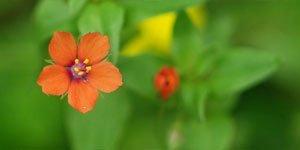 5 Blütenblätter