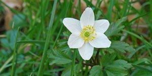 6 Blütenblätter