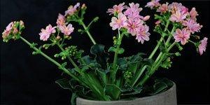 Alle Blüten