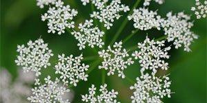 Sonstige Blüten